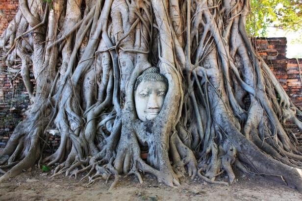 Ayutthaya (183)